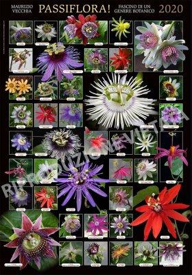 Poster Passiflora